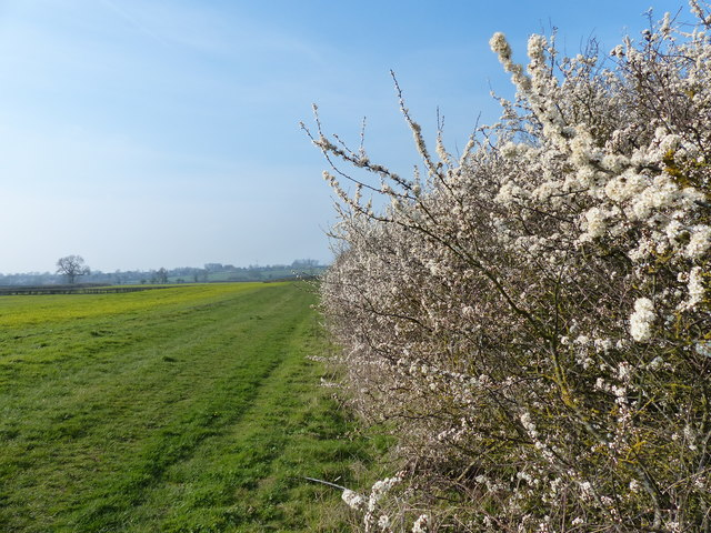 Blackthorn blossom next to the Grand Union Canal