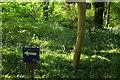 SX4867 : Bluebell Walk, Buckland Abbey by Derek Harper
