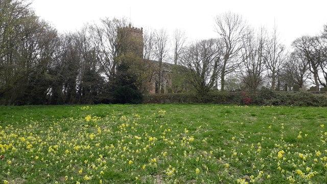 The Delph wild flower meadow, Melling