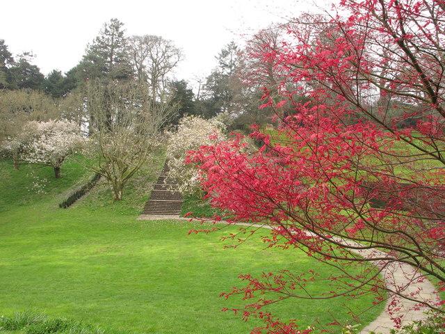 Dartington Hall: steps up Heath Bank, magnolia, maple