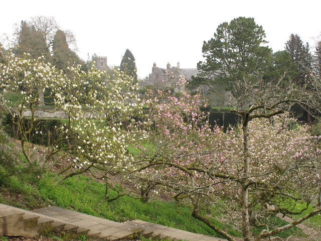 Dartington Hall and church seen past magnolia blossom