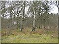 NT1044 : Corsincon Wood by M J Richardson