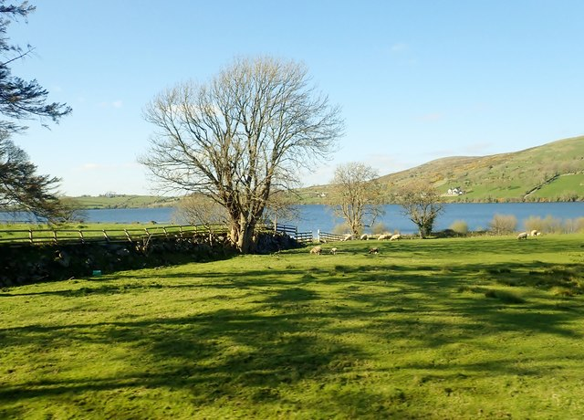 The shores of Lough Island Reavy from the Dublin Road