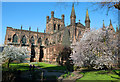 SJ4066 : Blossom at Chester Cathedral by Jeff Buck
