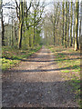 TL9492 : Looking South down Bambrige Lane now just a forest track by David Pashley