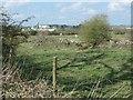 NZ1925 : Horses grazing along Hummer Beck by Christine Johnstone