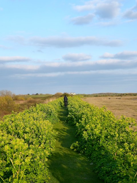 Footpath to Camber