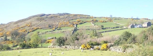 Patchwork of intake fields below Ballymagreenhan Wood