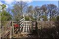 SE5612 : Railway foot crossing at Rushy Moor Plantation by Ian S