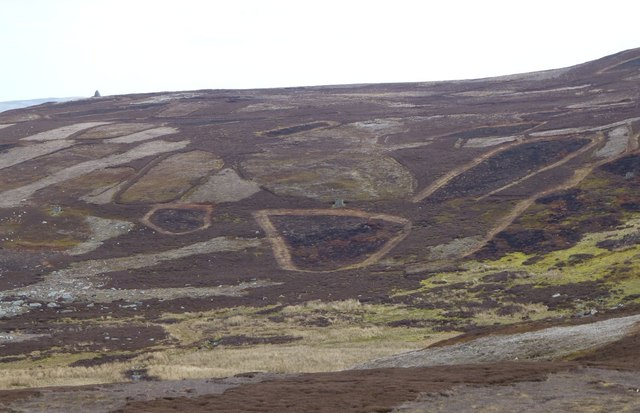 Grouse moor with butts