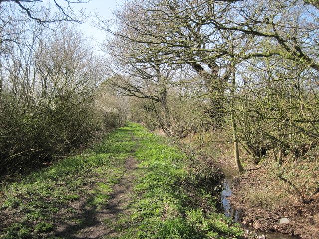 Path to Rough Head Wood