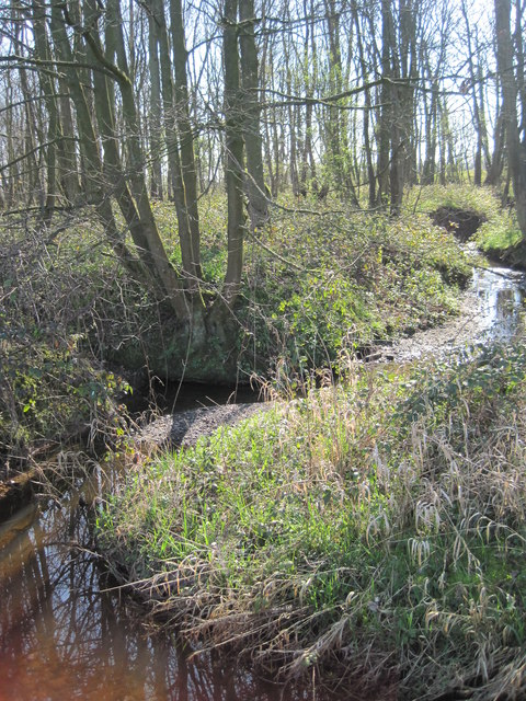 Brook through Rough Head Wood