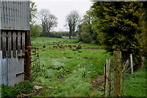 H4277 : Ground along Tully Road, Tattraconnaghty by Kenneth  Allen