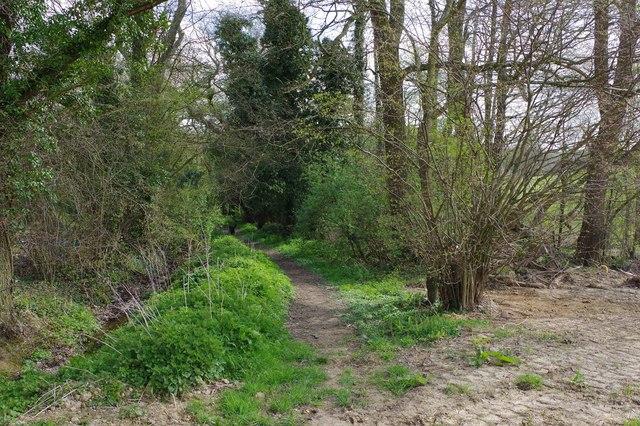 Geopark Way entering a wood, near Kinlet, Shrops