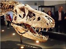 NS5666 : Tyrannosaurus rex skull by Richard Sutcliffe