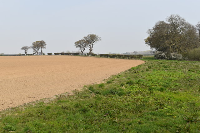 Uncultivated field corner near Croft Farm