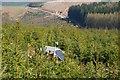 NT3534 : Monitoring equipment, forest on Plora Craig by Jim Barton