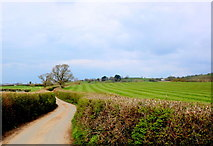SY2793 : Country Lane Lower Bruckland by Nigel Mykura