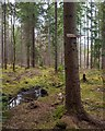 NH6066 : Evanton Community Wood - Secret Trail by valenta