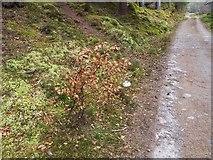 NH5966 : Evanton Community Wood by valenta
