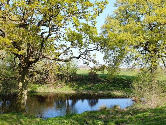 Pond at Twemlow