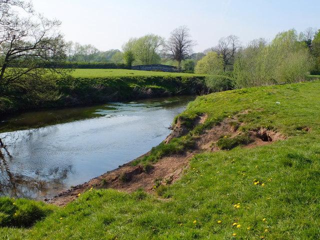 Erosion of the Bank of The River Dane near Hermitage Bridge