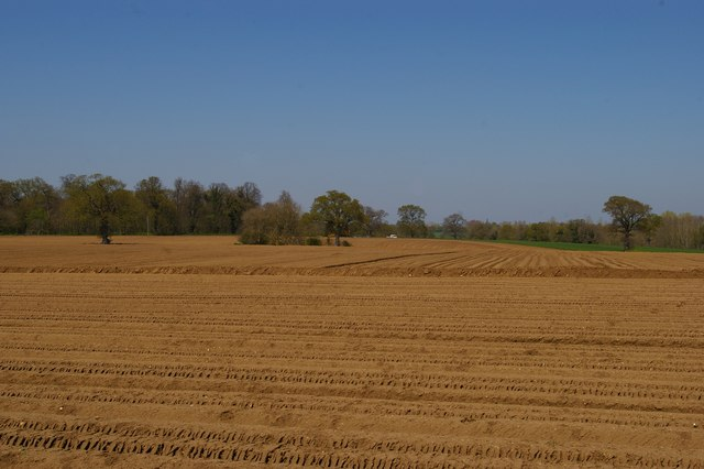 View towards Roundyard Wood from Church Road