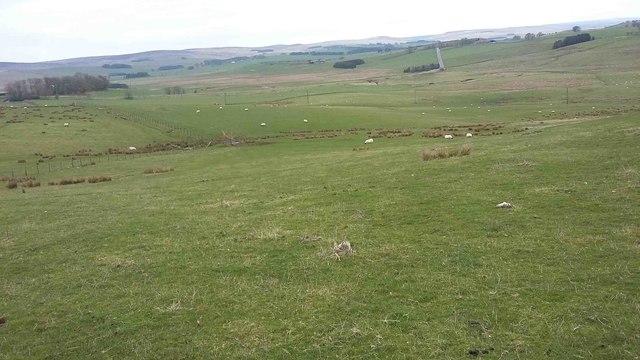 Farmland above A696