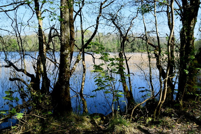 Trees along Lough Erne by Kenneth  Allen