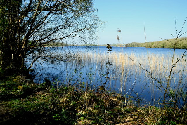 Reeds in the water, Lough Erne