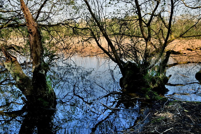 Tree reflections in the water, Lough Erne