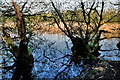H1860 : Tree reflections in the water, Lough Erne by Kenneth  Allen