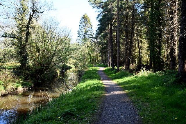 Woodland path, Bunaninver by Kenneth  Allen