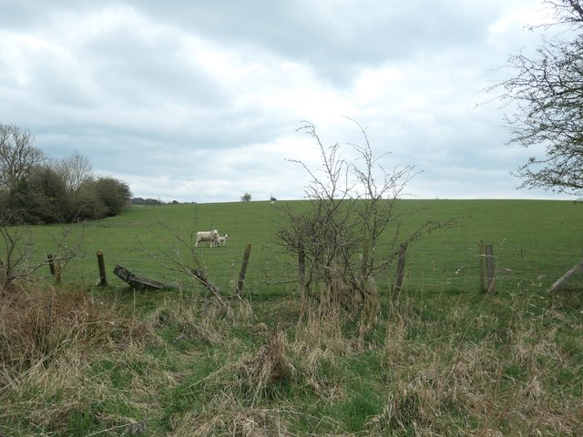 Sheep and a lamb, south-west of Lutterington