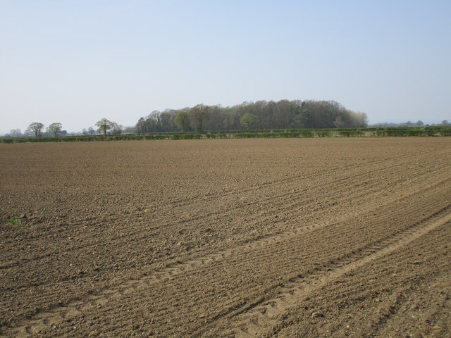 Sown field and Fitzwilliam Whin