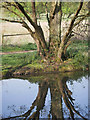 TL8293 : Reflection in Lynford Lakes by David Pashley