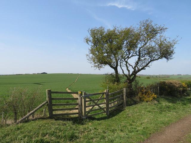 Bridleway gate near Sedgefield