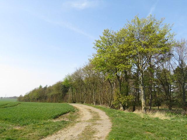 Public bridleway near Sedgefield