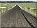 TL6563 : All weather training and exercise horse gallops on Warren Hill, Newmarket by Richard Humphrey