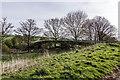 SJ7844 : Footbridge / Cattlebridge crossing the M6, Keele by Brian Deegan