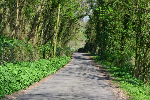 Bubnell Road beside Townsend Wood