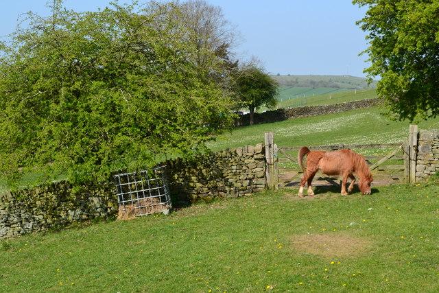 Pony in field beside Bar Road