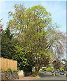 SX9364 : Spring, Wellswood by Derek Harper