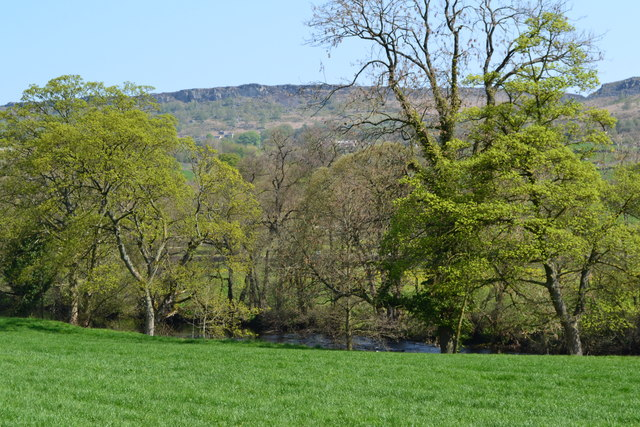 Trees beside the River Derwent