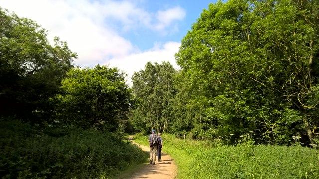 Walking through Haywood Oaks Plantation