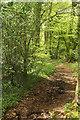 SX7873 : Dartmoor Way? in Goodstone Woods by Derek Harper
