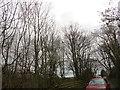 NZ1451 : Rookery at Stoney Heap by Robert Graham
