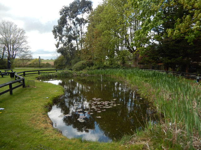 Duck pond - The Greyhound, Milton Malsor