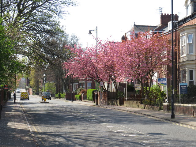 Spring colour on Tunstall Road, Sunderland