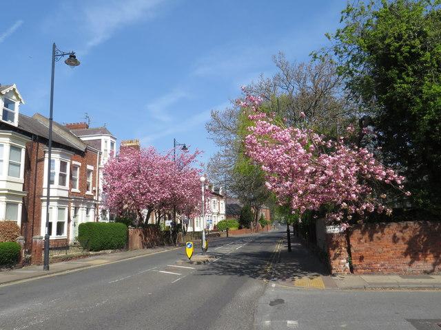 Spring colour on Tunstall Road, Sunderland